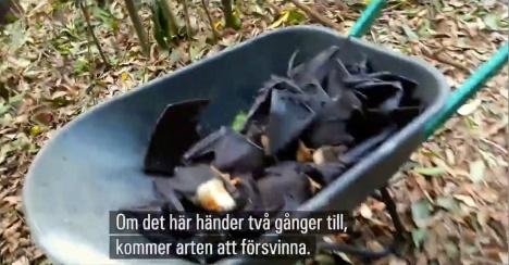 climatechangeinaction_svenska